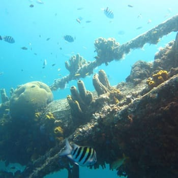 Wreck of German freighter from World War II 2 | Arubiana