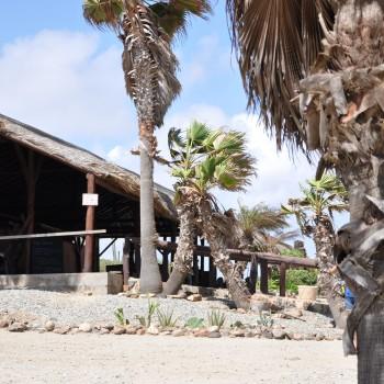 Ostrich Farm 1 | Arubiana
