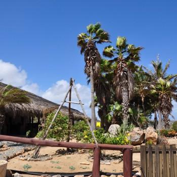 Ostrich Farm 3 | Arubiana