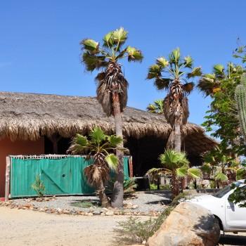 Ostrich Farm 5 | Arubiana