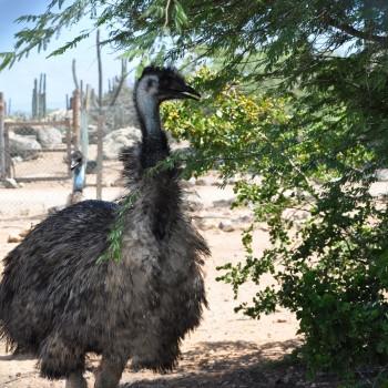 Ostrich Farm 7 | Arubiana