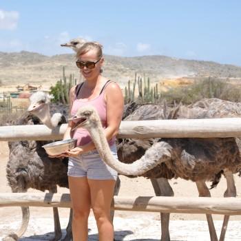 Ostrich Farm 14 | Arubiana