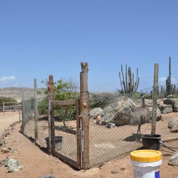 Ostrich Farm 17 | Arubiana