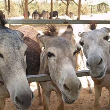 Donkey Sanctuary 1 | Arubiana