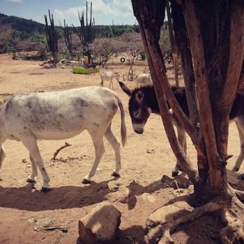 Donkey Sanctuary 2 | Arubiana