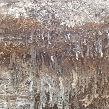 Stalactite Formation 2 | Arubiana